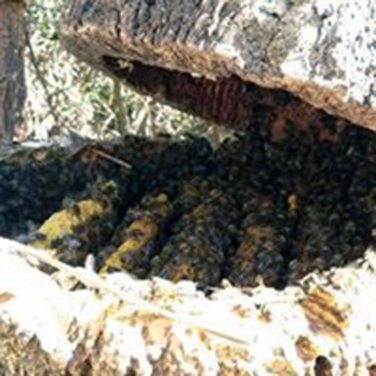 Cork hives