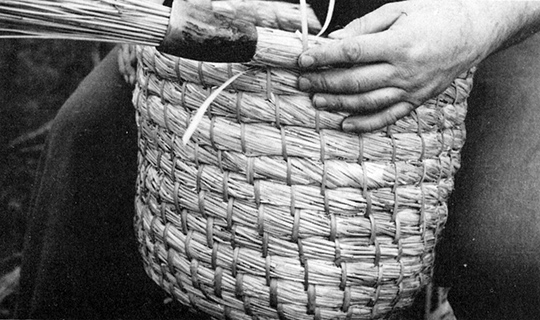 Close up to show symmetry of the skep