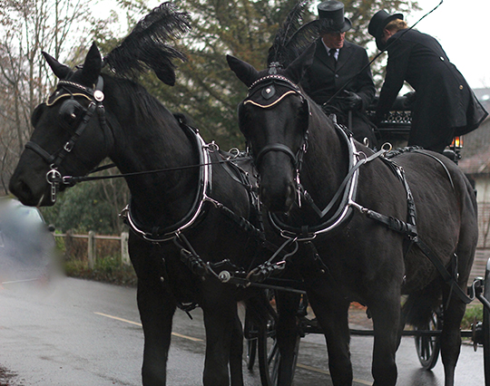 Hungarian half-brothers, completely black, shiny, frisky, with huge black feather plumes on their foreheads, drew the carriage to the graveyard.