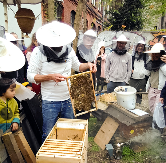 Learning about bees in a long, deep-frame hive.