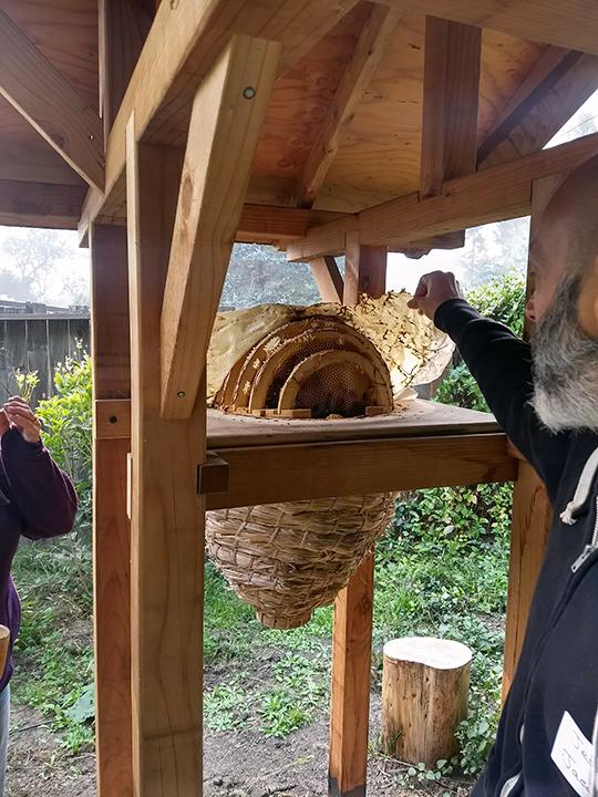 Alan, with Sun Hive