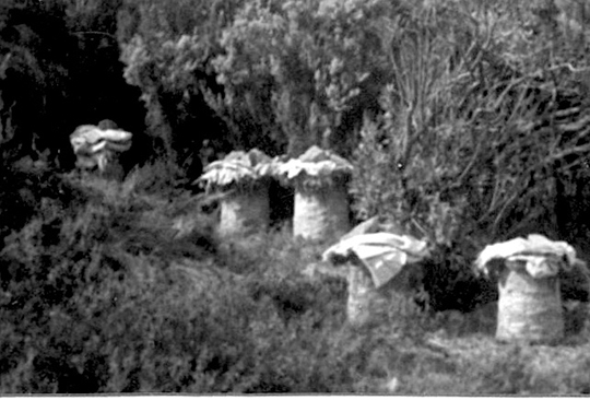 Colonies of bees at Mount Athos in the past