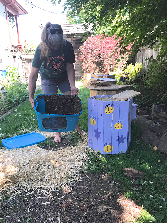 Prior to moving the hive, Susan gave a swarm this beautifully decorated home.