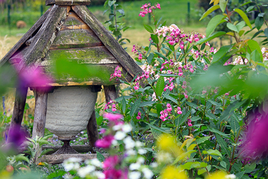 Late summer, Sun Hive surrounded by Himalayan Balsam plants