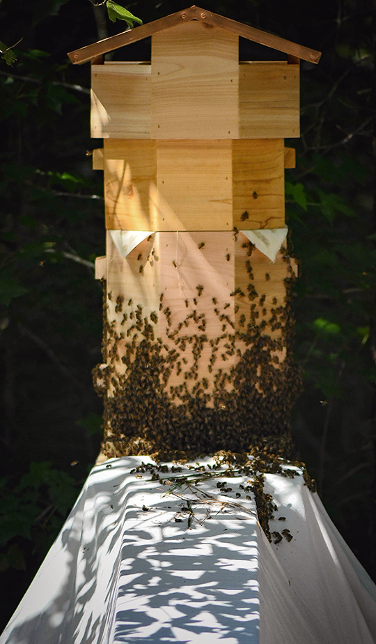 Swarm entering a hexagonal shaped hive based on the Warré hive