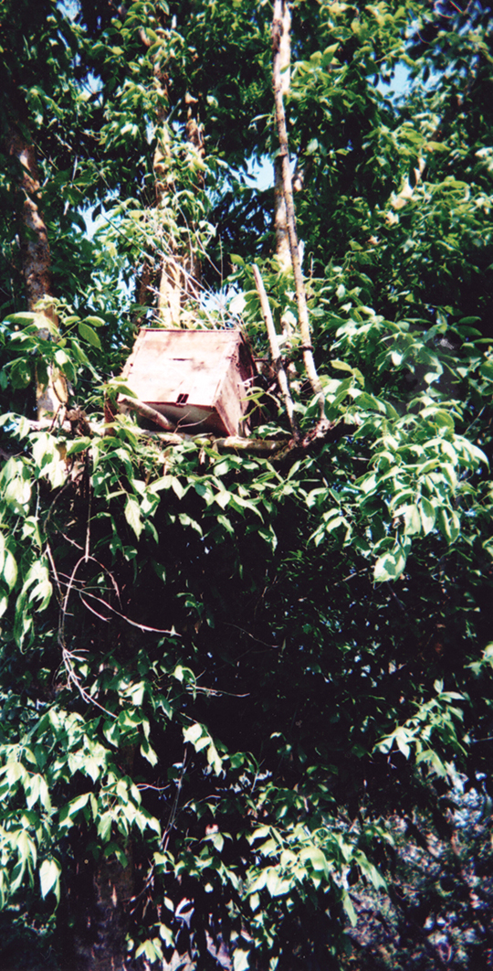 Bait hive placed high up in a tree.