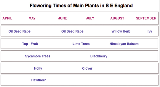 Table to show the plants commonly available for bees to forage on in my part of England.