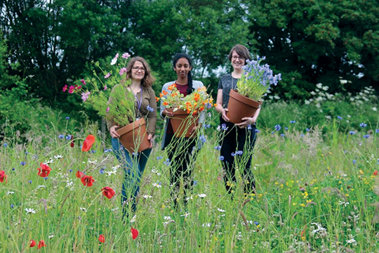 The Blooms for Bees Team - left to right, Judith Conroy, CAWR Associate, Giri Kiritharan, CAWR Intern and Gemma Foster, CAWR Researcher and Project Lead, with some of the bees' favourites at Ryton.