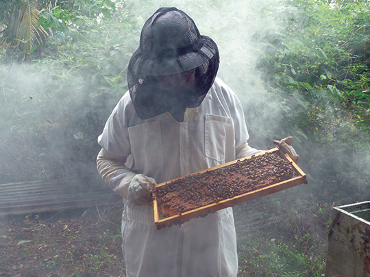 Handling Chunilal's bees in his home apiary; lots of smoke!