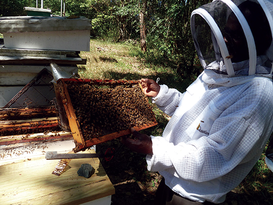 Edson George in his apiary at Canaan, Tobago.
